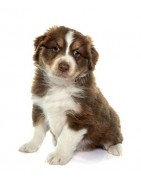 Hondenvoer en overige benodigdheden